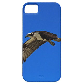 Osprey in Flight II Barely There iPhone 5 Case