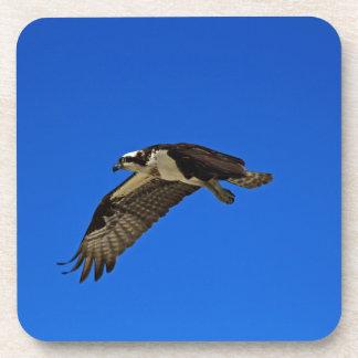 Osprey in Flight II Coaster