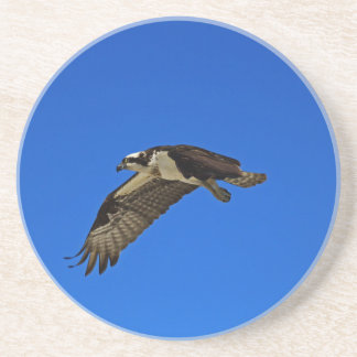 Osprey in Flight II Coaster