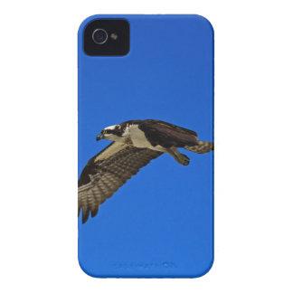 Osprey in Flight II iPhone 4 Case-Mate Case