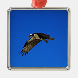 Osprey in Flight II Silver-Colored Square Decoration