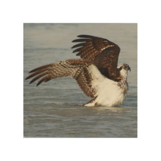 Osprey in the Ocean Wood Print