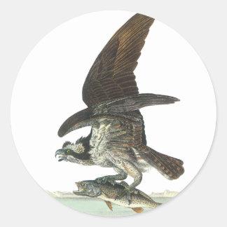 Osprey, John Audubon Classic Round Sticker