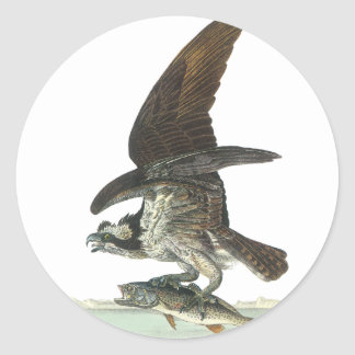 Osprey, John Audubon Round Sticker