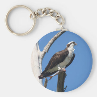 Osprey lunchtime key ring