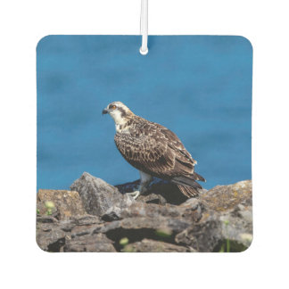 Osprey on the rocks car air freshener