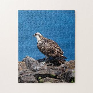 Osprey on the rocks jigsaw puzzle