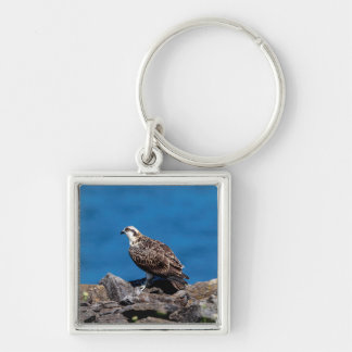 Osprey on the rocks key ring