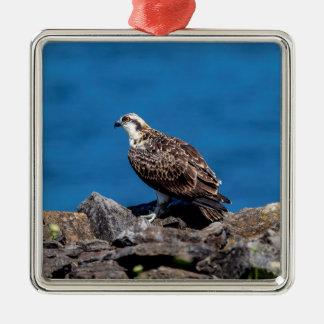 Osprey on the rocks metal ornament