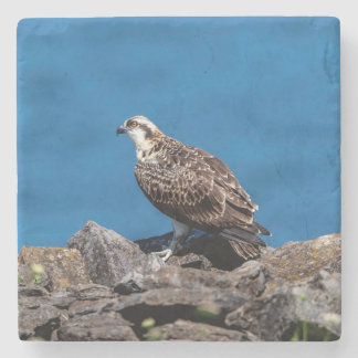 Osprey on the rocks stone coaster
