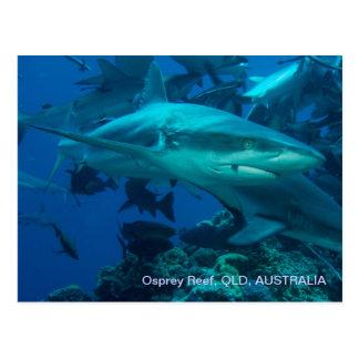 Osprey Reef Shark Dive Postcard