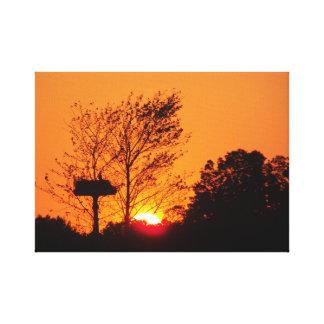 Osprey Sunset Canvas Print