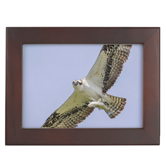 Osprey with a fish keepsake box