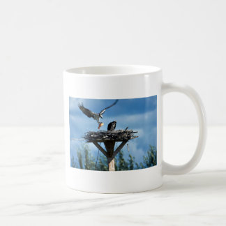 Osprey with fish for chicks, Pandion haliaetus, fl Coffee Mug