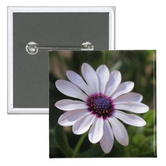 Osteospermum 15 Cm Square Badge