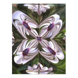 Osteospermum Abstract Postcard