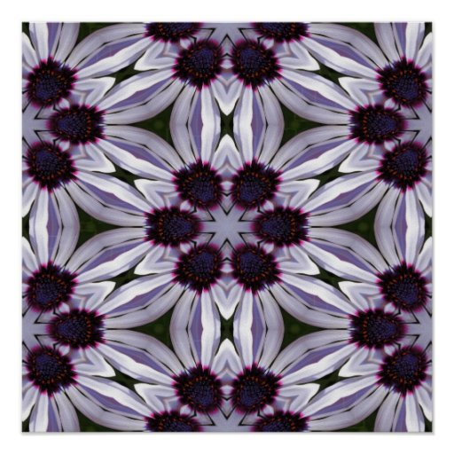 Osteospermum Abstract Poster