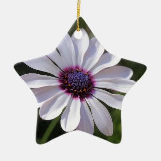 Osteospermum African Daisy Christmas Tree Ornaments