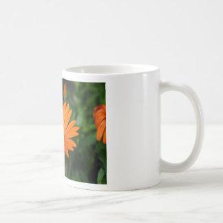 Osteospermum Basic White Mug