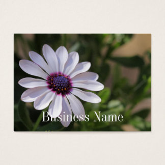 Osteospermum Business Card
