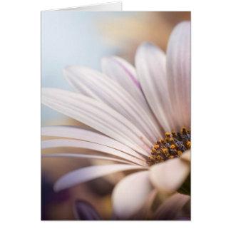 Osteospermum Card