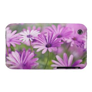 Osteospermum flowers iPhone 3 case