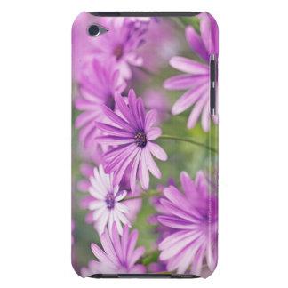 Osteospermum flowers Case-Mate iPod touch case