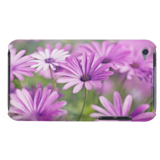 Osteospermum flowers iPod touch case