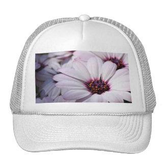 Osteospermum Mesh Hats