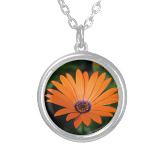 Osteospermum Silver Plated Necklace