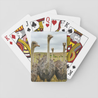Ostrich Bird Poker Deck