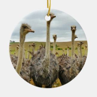 Ostrich Bird Round Ceramic Decoration