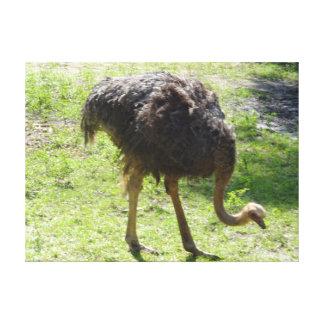 Ostrich Canvas