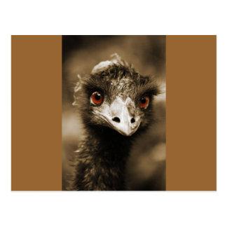 Ostrich Fun Postcard