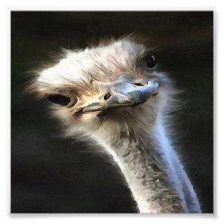Ostrich Head Photo Print