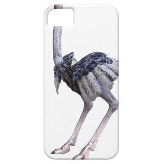 Ostrich iPhone 5 Cover