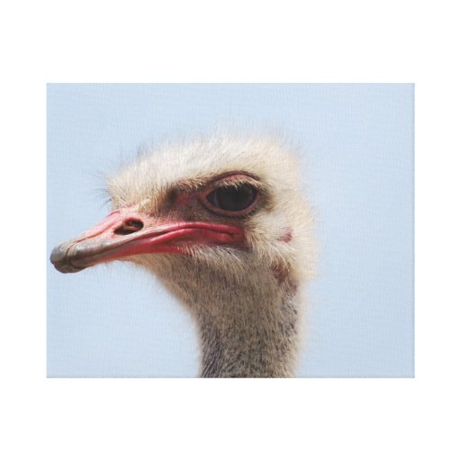 Ostrich Profile Gallery Wrapped Canvas