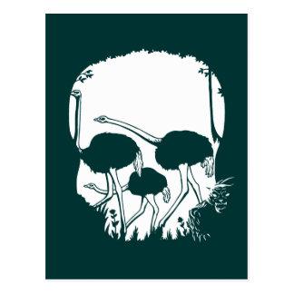 Ostrich Skull Illusion Postcard