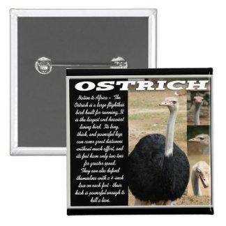 OSTRICH with Description 15 Cm Square Badge