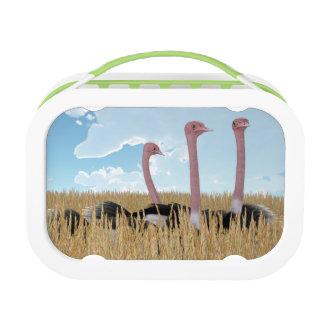 Ostriches Lunch Box