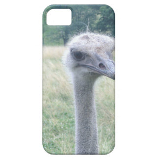 ostrichhead.JPG iPhone 5 Cases