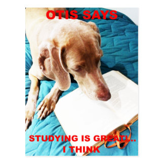 Otis Says: Studying Is Great!! Postcard