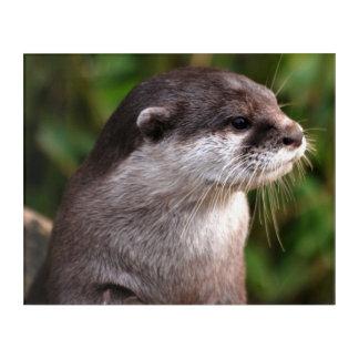Otter close-up acrylic print