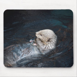 Otter eating water animal nature aquatic wild zoo mouse pad