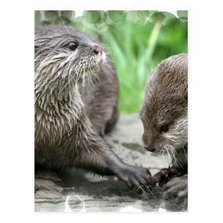 Otter Habitat Postcards