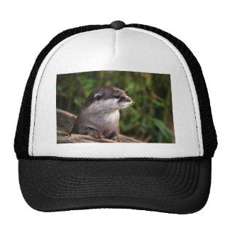 Otter Mesh Hats