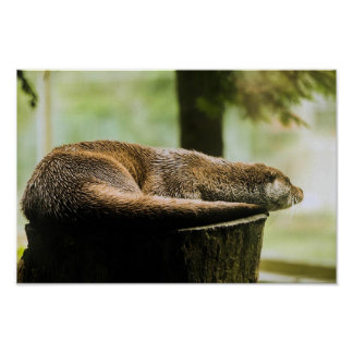 Otter on a log poster
