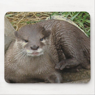 Otter Resting Mouse Pad