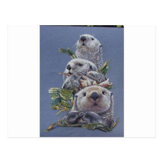 Otter  Trio Postcard