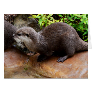 Otterly Adorable Small Grey Otter, Jumbo Greeting Card